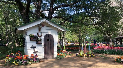 昭和記念公園 チューリップ