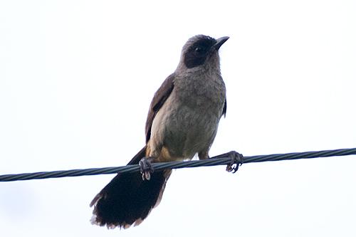 謎のタヌキ鳥