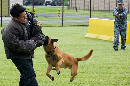 入間基地 警備犬