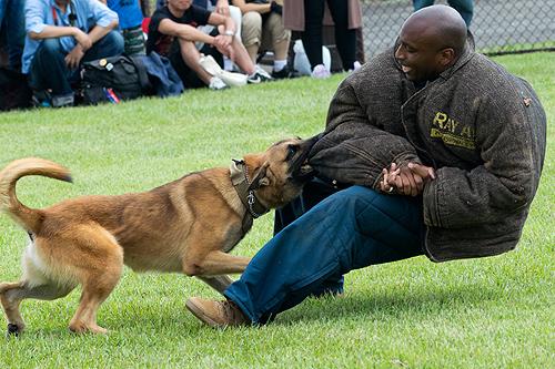 警備犬演技